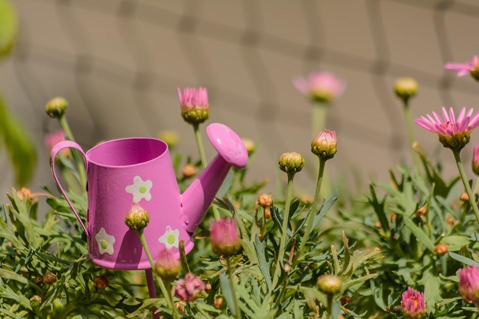 flowers-2209817_960_720