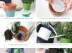 repot-plants-IG-rd2