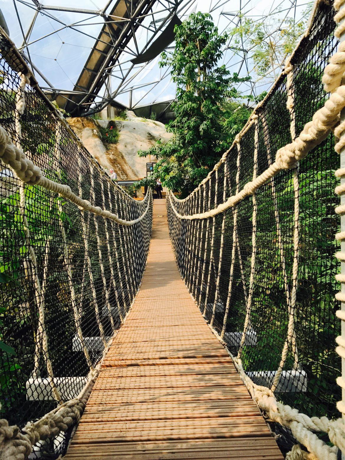 Rainforest biome canopy walk