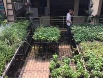 640_gardening-3(1)_2017_07_10_12_04_41
