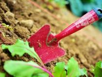 gardening-2448134_1920