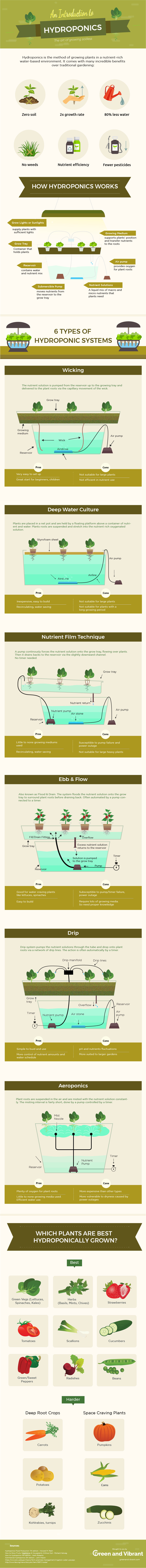 hydroponic-gardening-infographic-1