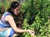 victoriaville-gardens