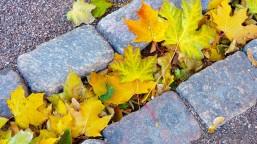 leaves-219150_1280