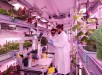 EDEN ISS  Ground Demonstration of Plant Cultivation Technologies for Safe Food Production in Space Pictures taken on June 28, June 29 and June 30, 2017 at DLR Bremen, Germany. Consortium German Aerospace Centre (DLR), Germany; LIQUIFER Systems Group, Austria; National Research Council, Italy; University of Guelph, Canada; Alfred Wegener Institute for Polar and Marine Research, Germany; Enginsoft S.p.A., Italy; Airbus Defense and Space, Germany; Thales Alenia Space Italia S.p.A., Italy; Aero Sekur S.p.A., Italy; Wageningen University and Research, the Netherlands; Heliospectra AB, Sweden; Limerick Institute of Technology, Ireland; Telespazio S.p.A., Italy