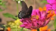 butterfly-2898052_1280