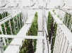 2-this-underground-urban-farm-in-sweden-doesnt-pay-rent