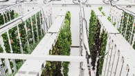 2-this-underground-urban-farm-in-sweden-doesnt-pay-rent