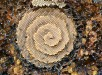 stingless-sugarbag-bees-1.jpg.860x0_q70_crop-scale