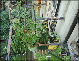apartment vegetable garden