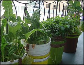 How To Start Your Own Vegetable Container Garden Using Self Watering  Containers