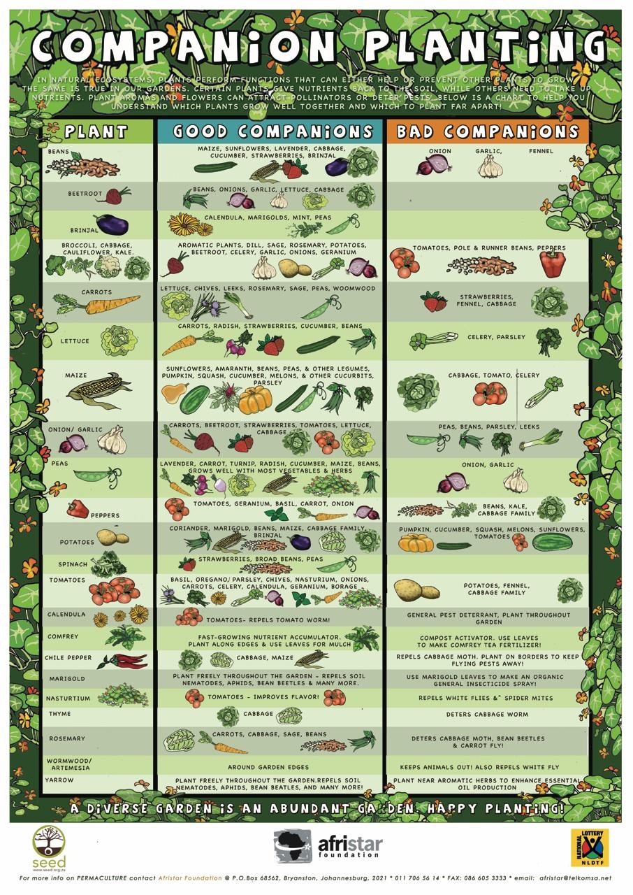 Urban Organic Gardening Companion Planting Chart Urban