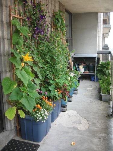 toronto-sip-balcony-garden-in-the-sky