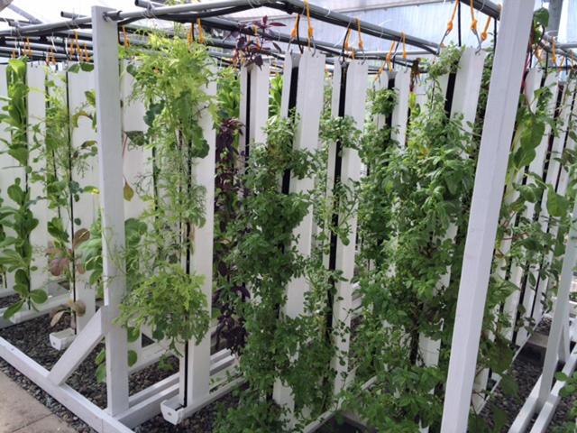 3054017-inline-s-7-how-an-urban-farmer-in-california-is-pioneering