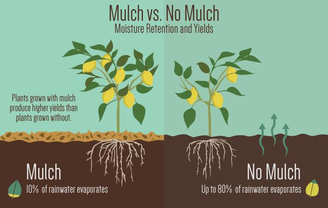mulch-much-01