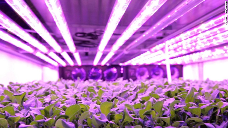 160901122440-aerofarms-led-bright-purple-resized-exlarge-169