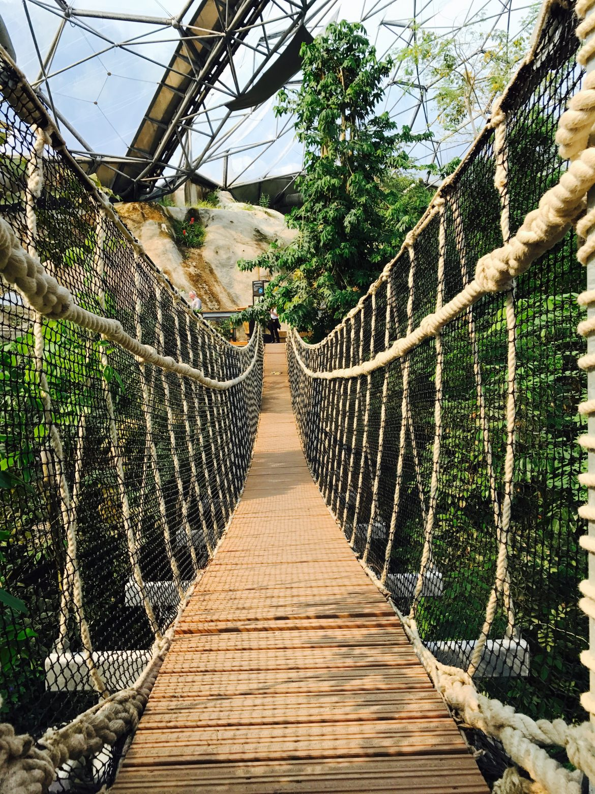Rainforest biome canopy walk