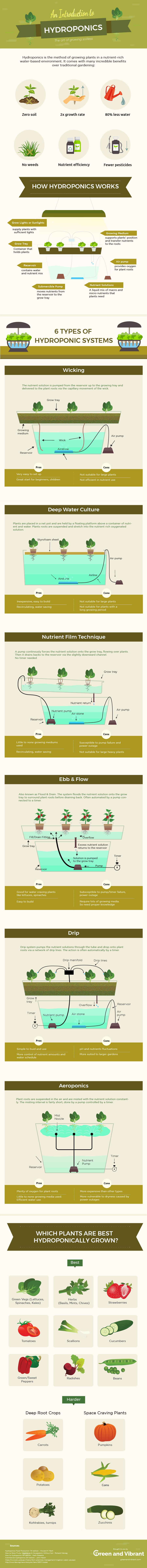 hydroponic-gardening-infographic-1