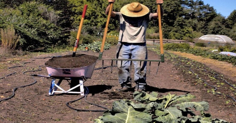 mad-genius-farmer-29-1426282839-750x393