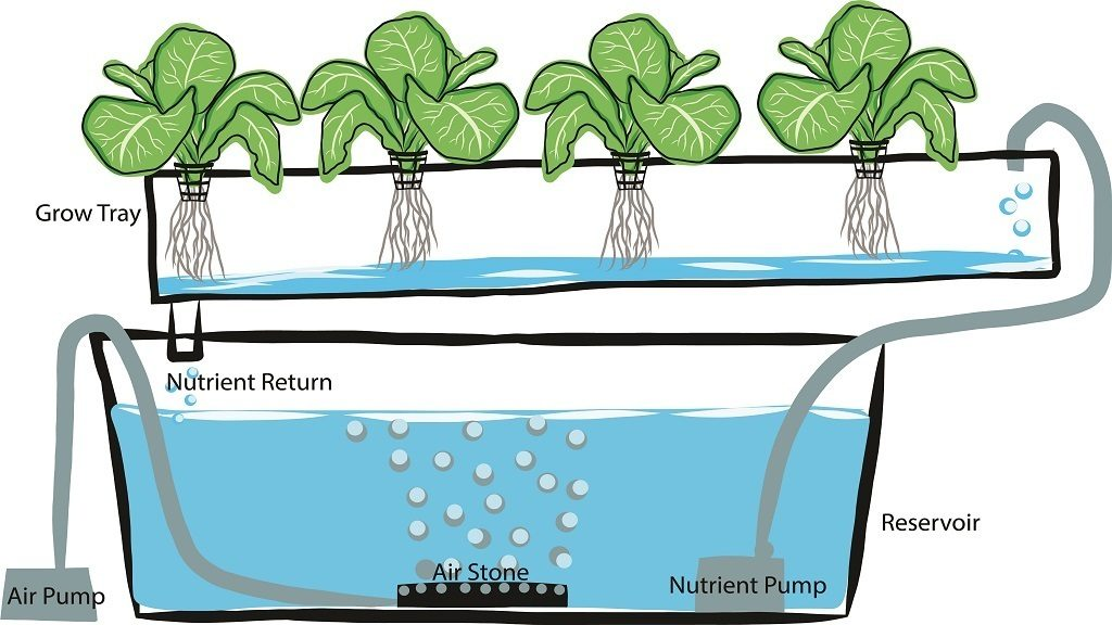 Hydroponics Guide: Learn To Grow Plants Without Soil 2018