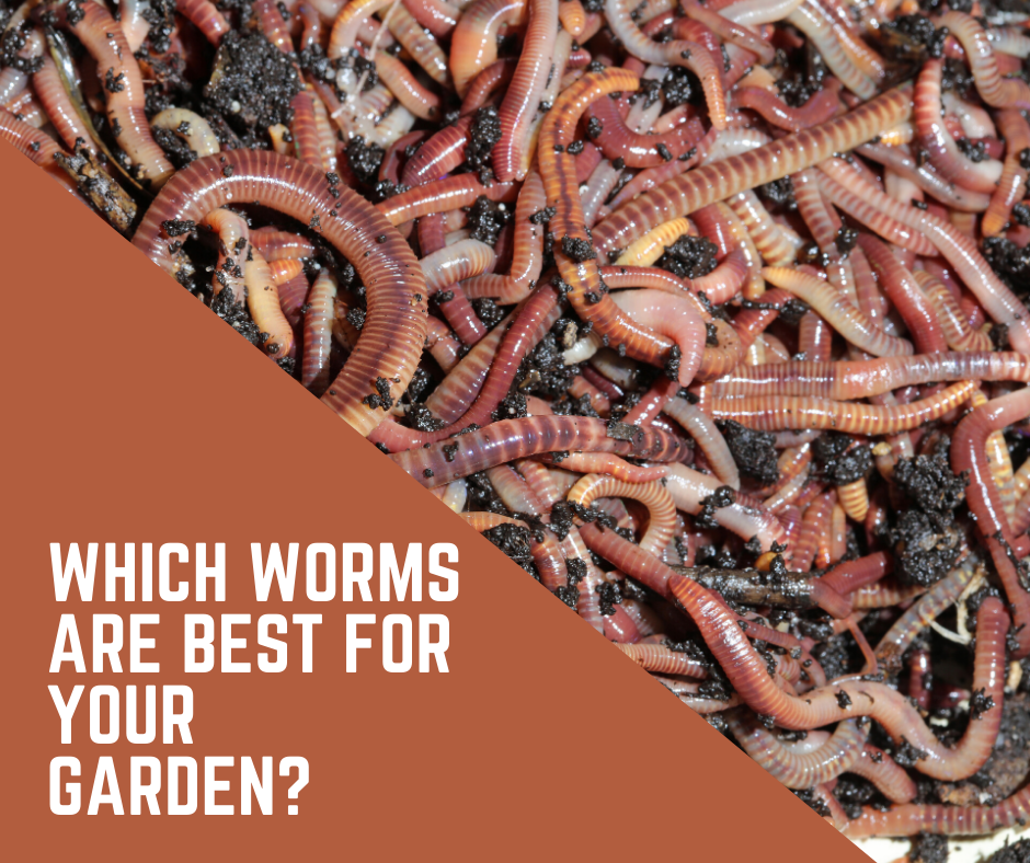 Are Worms Good For The Garden Why You Should Create A Worm