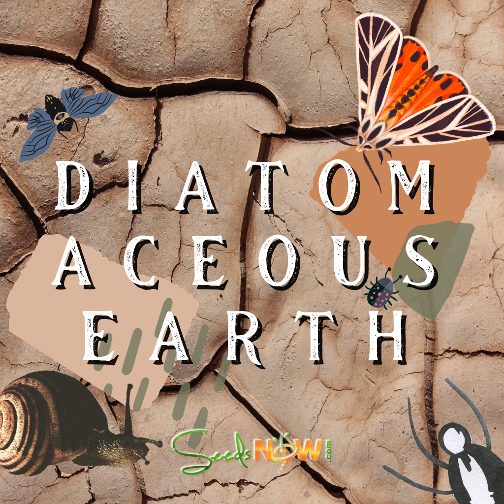 What is Diatomaceous Earth and How Can You Use It In The Garden?