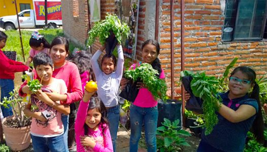 From floating islands to abandoned lots: urban gardening in Mexico