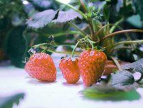 Indoor Gardening Urban Organic Gardener