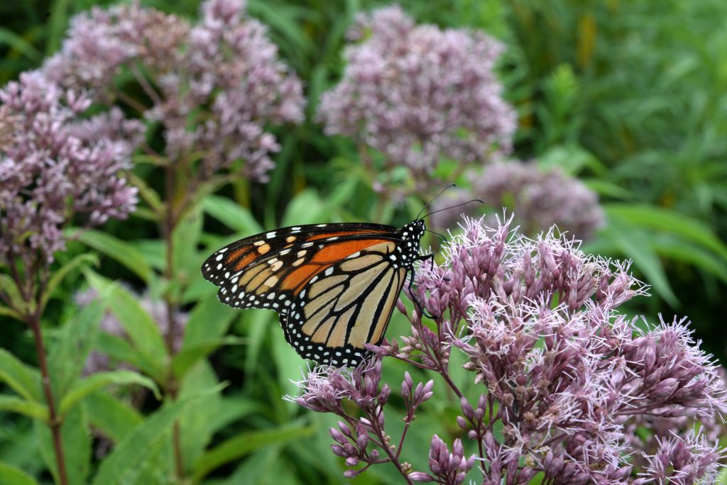 Pollinators and Migratory Species Search Fall Meals